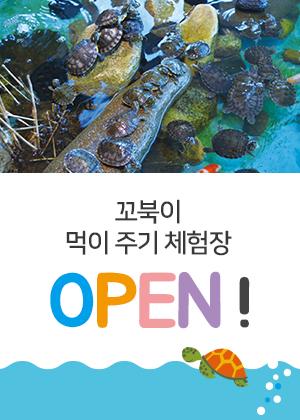 180727-꼬북이-먹이주기-체험장-오픈-팝업.jpg